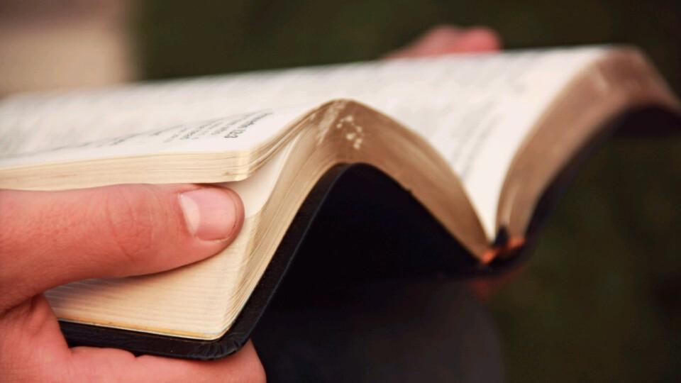 Wow Tuesday Women's Bible Study (Andi Miller)